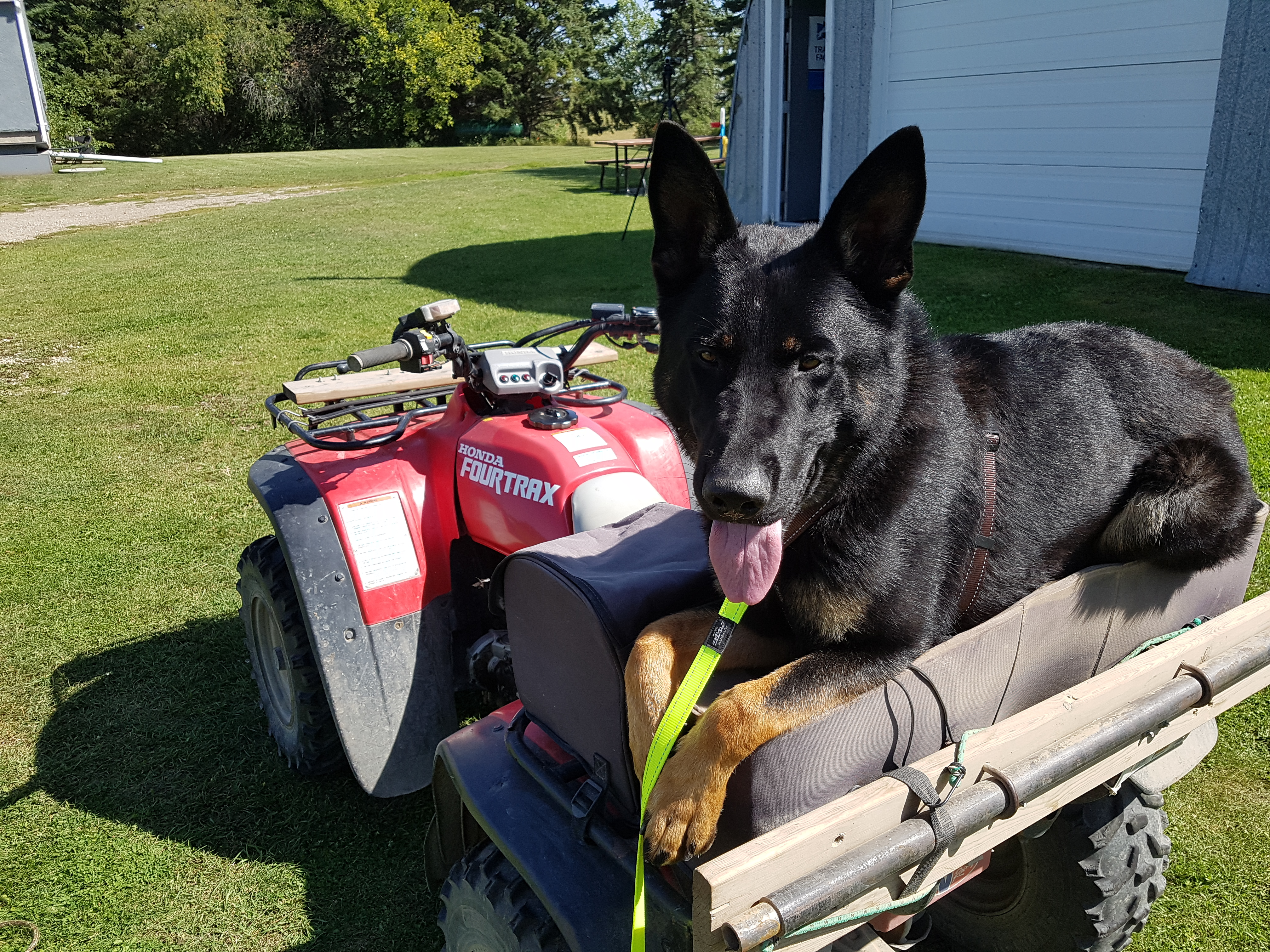 Dog riding a quad.